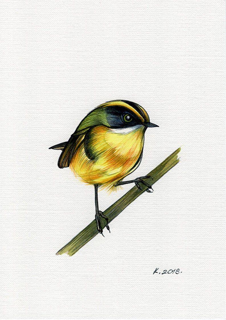 Bird Watercolour Bird Illustration Bird Of Paradise Wall Art