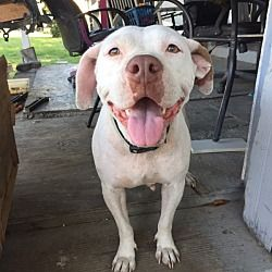 Pin On Rescue Dogs