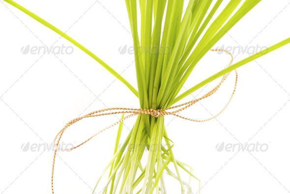 a tuft of grass isolated on white (beautiful, bright, cheerful, closeup, colored...  #Beautiful #Bright #Cheerful #closeup #Colored #Grass #Isolated #tuft #white