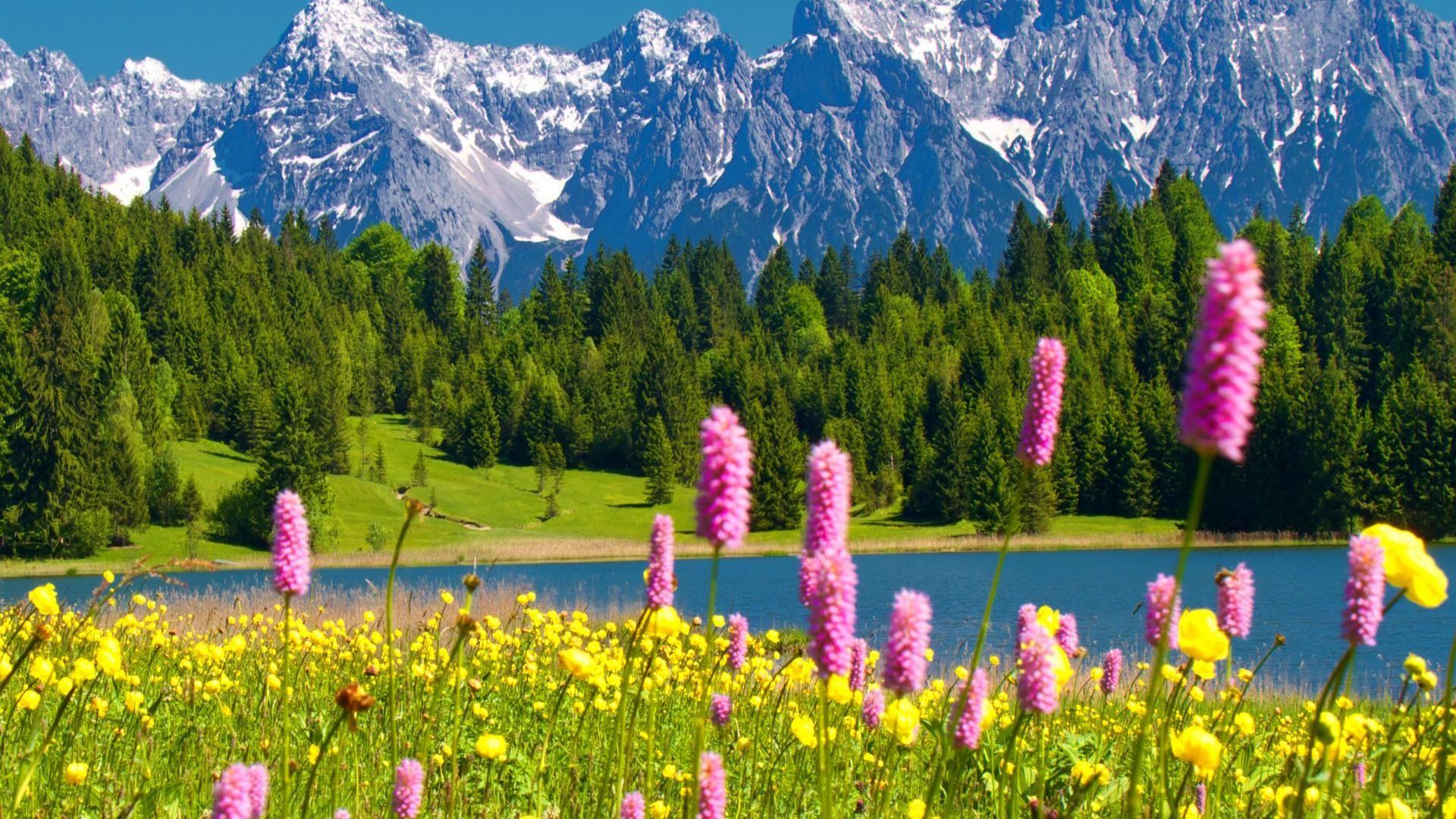 Good Wallpaper Mountain Flower - 80d55da3d5541c992b07b1d3d3f46654  Graphic_93861.jpg