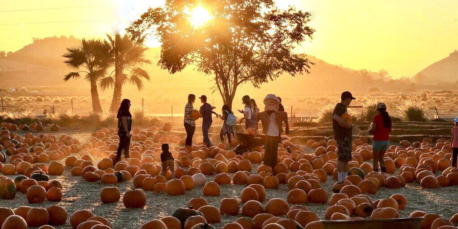 The 3 Best Places For Pumpkin Picking In The Bay Area