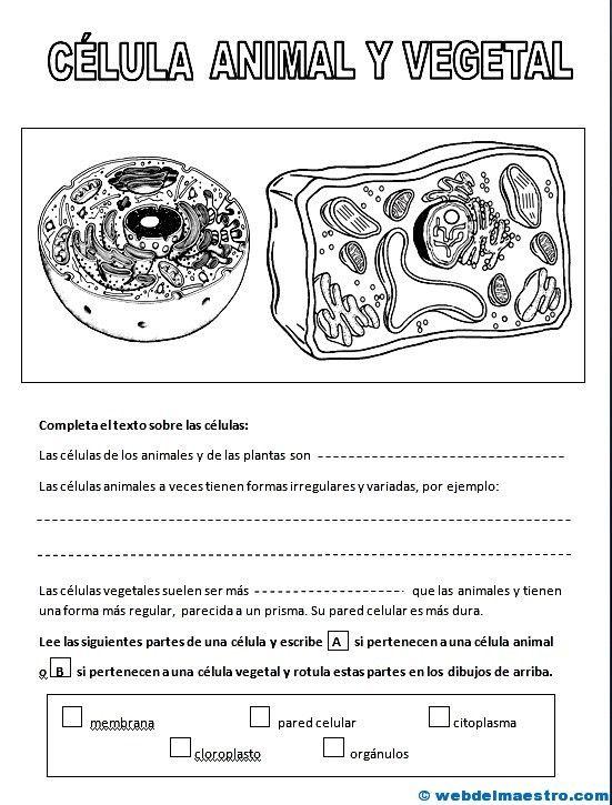 La célula   Las celulas, Celulas y Biología