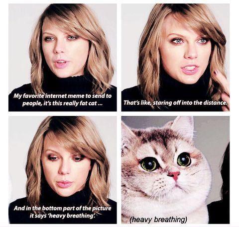 Taylor Swift\u0027s favorite meme is the heavy breathing cat