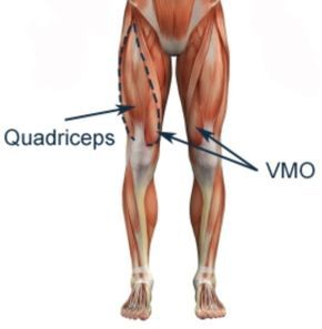 Quad Talk with Christye | anatomy | Pinterest | Muscle groups ...