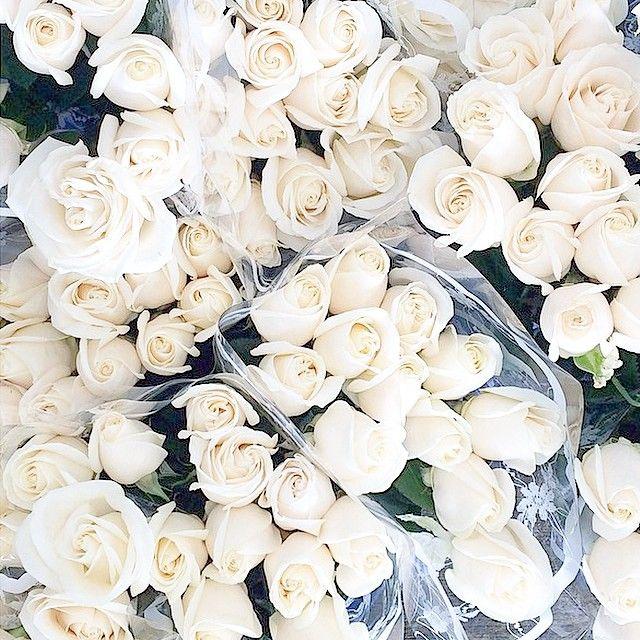Seewantshops photo on instagram flowers pinterest flowers seewantshops photo on instagram flowers pinterest flowers instagram and white roses mightylinksfo