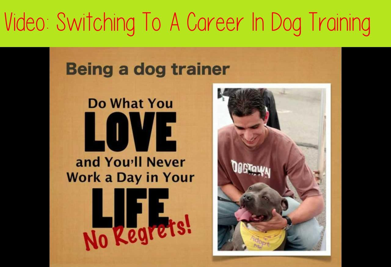 Switching To A Career In Dog Training14 10 Life As A Dog Trainer28