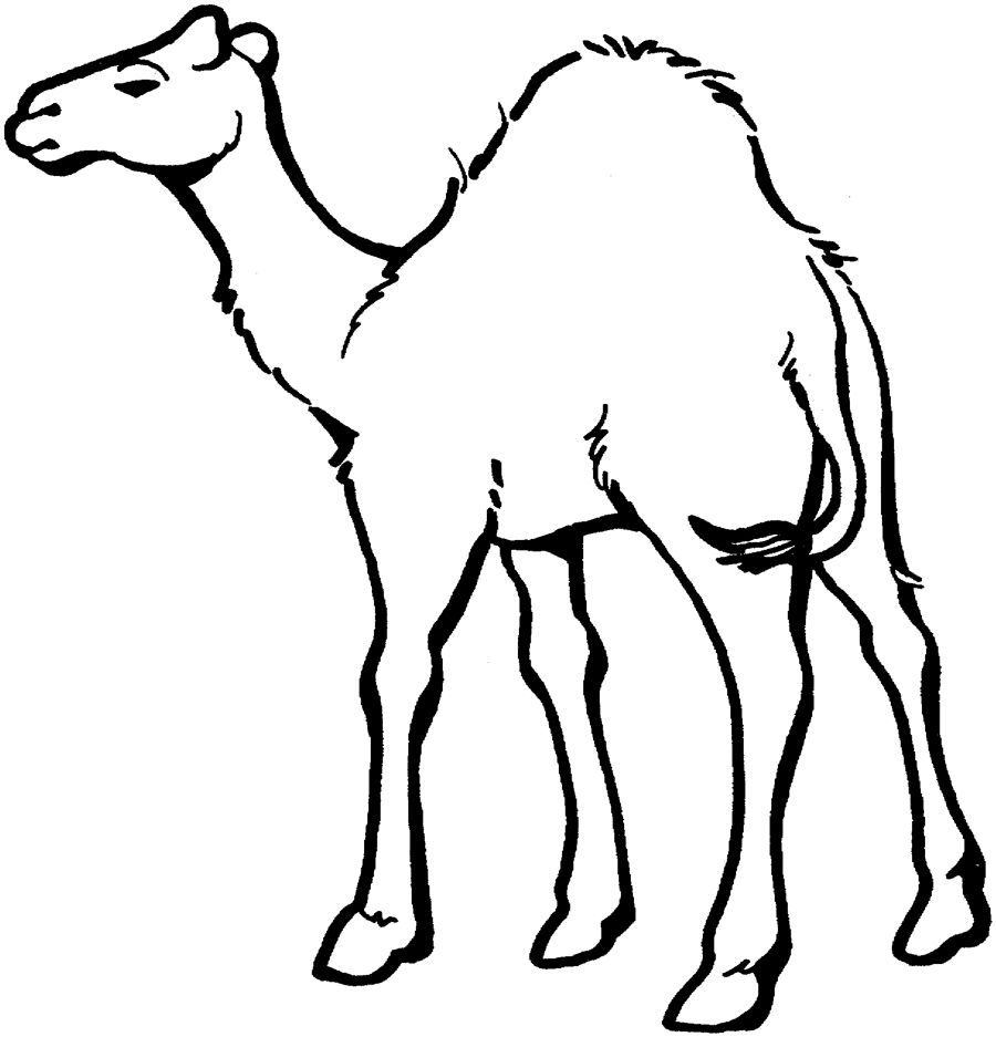 Printable zoo coloring book - The Tail Playing Camels Coloring Pages For Kids Printable Camels Coloring Pages For Kids