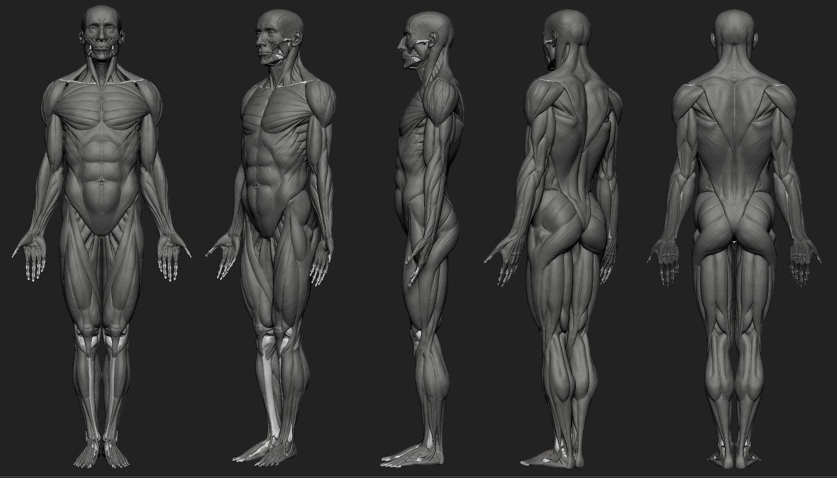 ArtStation - Human male anatomy study ecorche, Artur Owsnicki ...