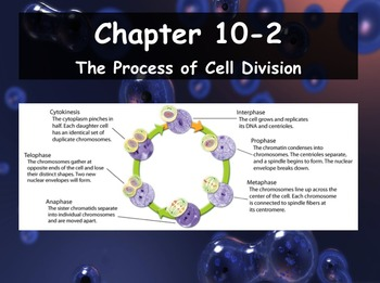 Biology 10 2 The Process Of Cell Division Ppt And Guided Notes Cell Division Biology Biology Textbook