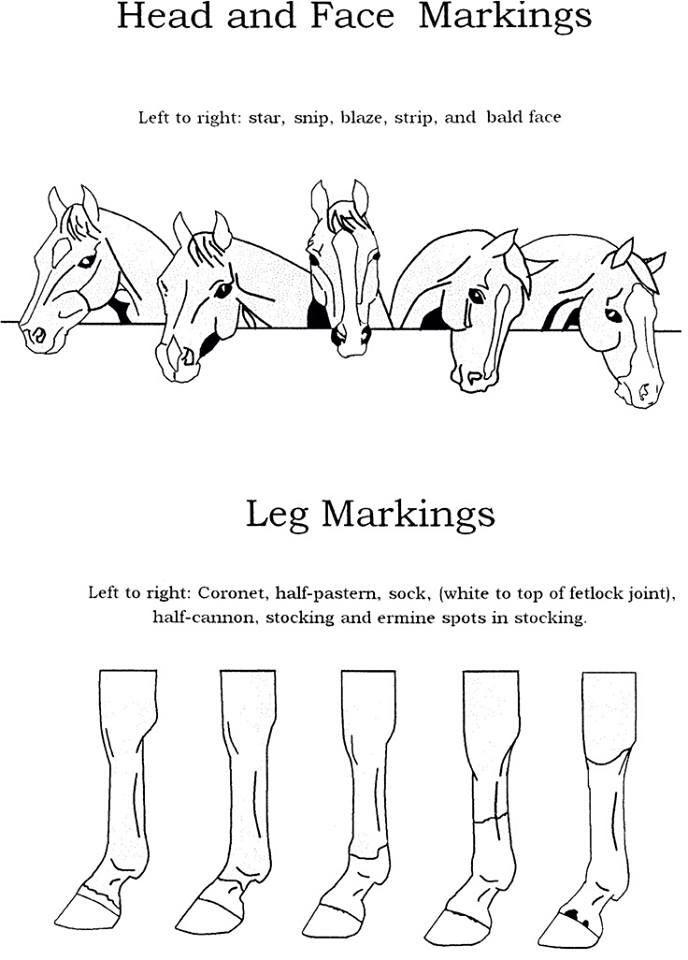 Markings Horsey Stuff Pinterest Horse Camp And Horse
