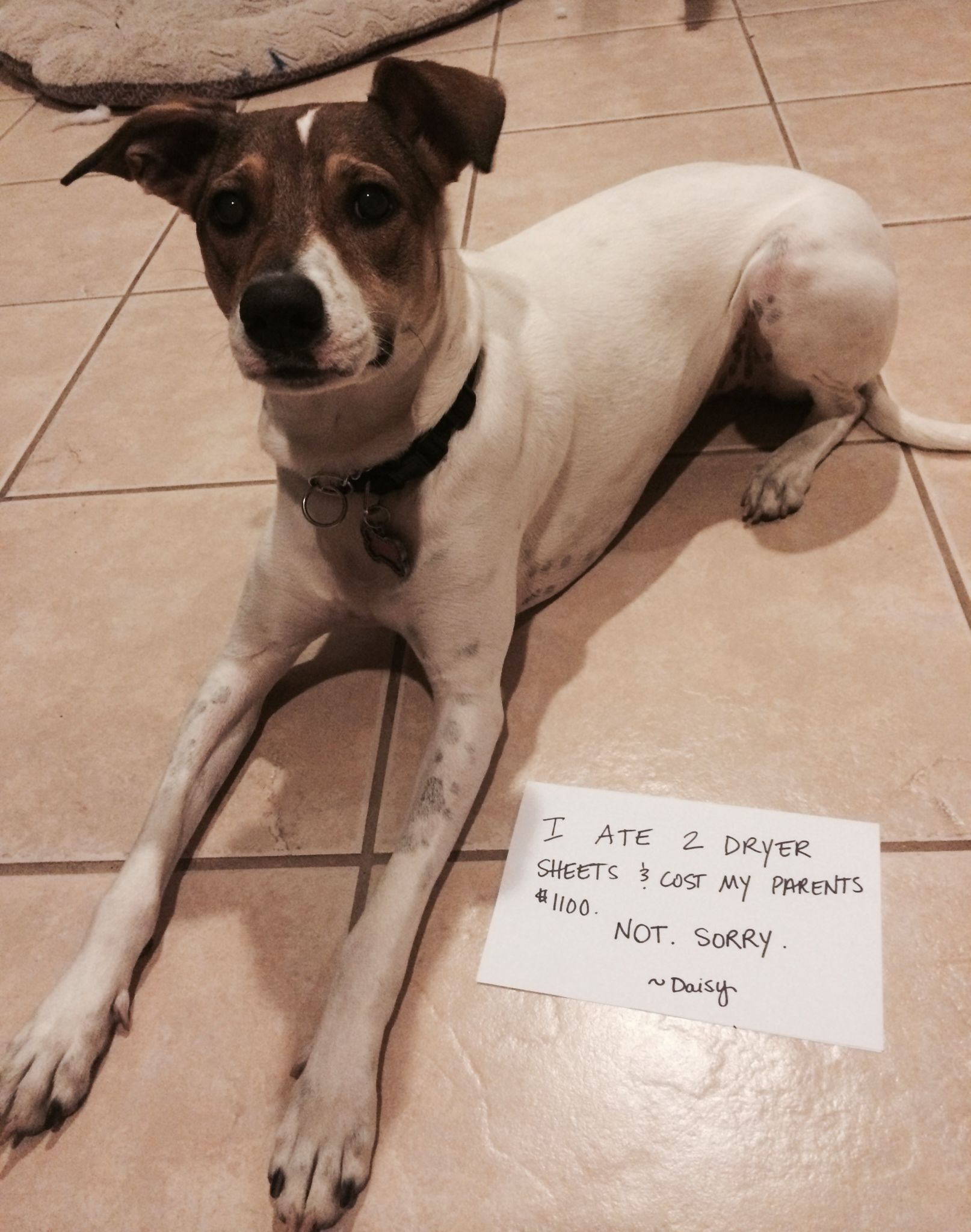 Well I Was Hungry Dog Shaming Dog Shaming Photos St Bernard Dogs
