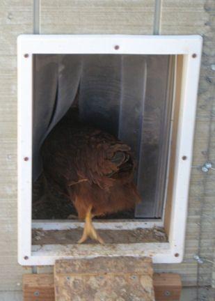 Easy Backyard Chicken Coop Plans & Easy Backyard Chicken Coop Plans | Keep in Pet door and Doors Pezcame.Com