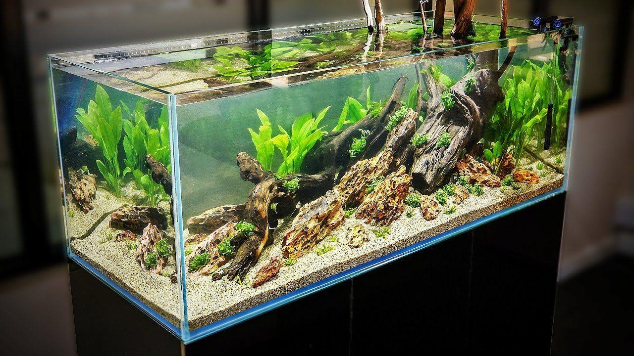 HOW TO AQUASCAPE a 125 gal. Nature Aquarium - YouTube ...