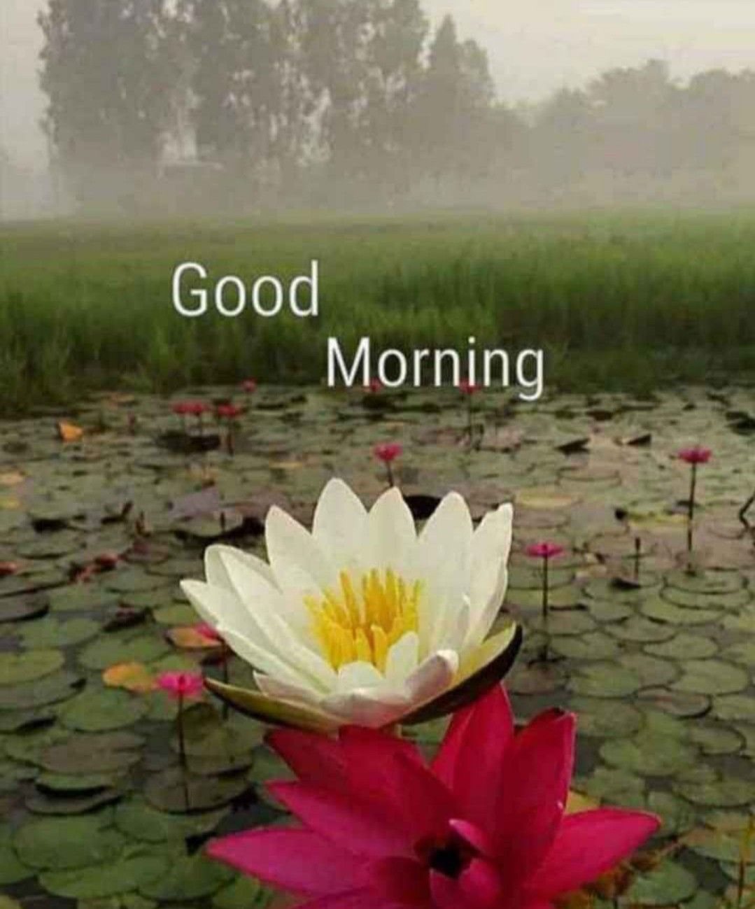 Happy New Month Good Morning Beautiful Flowers Good Morning Nature Good Morning Greetings