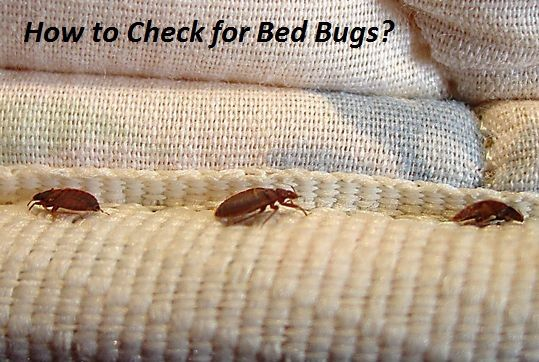 How To Check For Bed Bugs How To Tell If You Have Bed Bugs