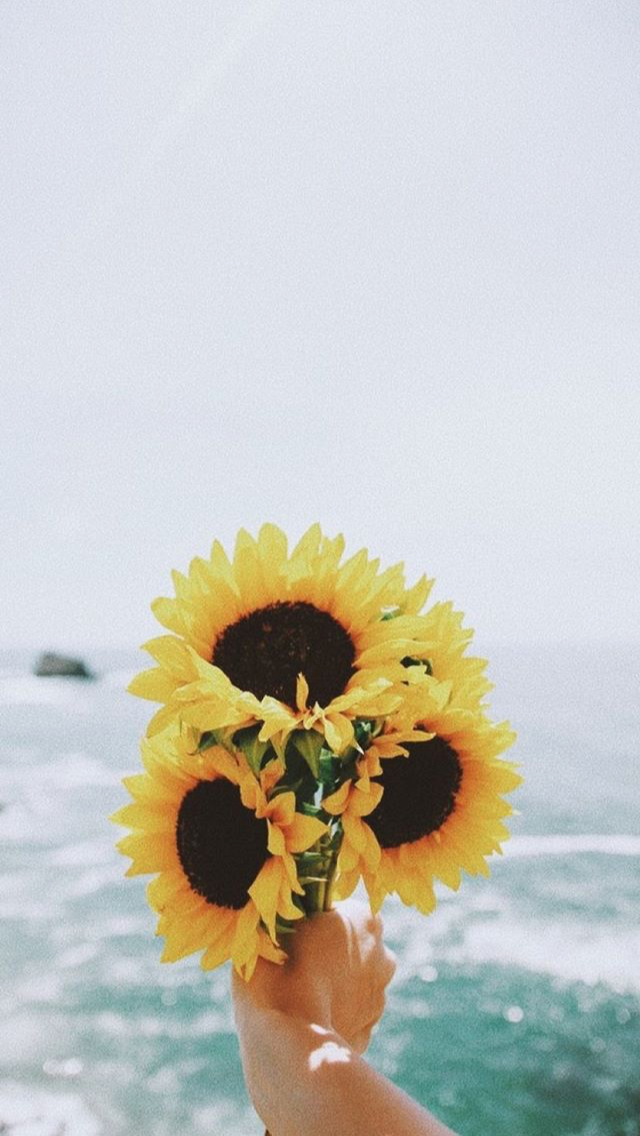 Cute Sunflower Iphone Wallpaper Wallpapers Iphone 20 Sunflower Wallpaper Sunflower Iphone Wallpaper Android Wallpaper Flowers
