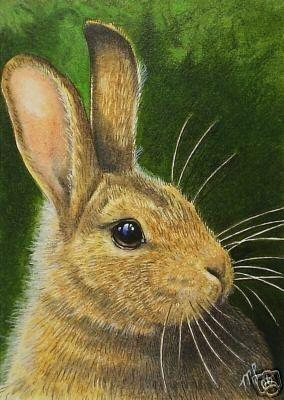 Cute Baby Bunny Art by Melody Lea Lamb ACEO Print