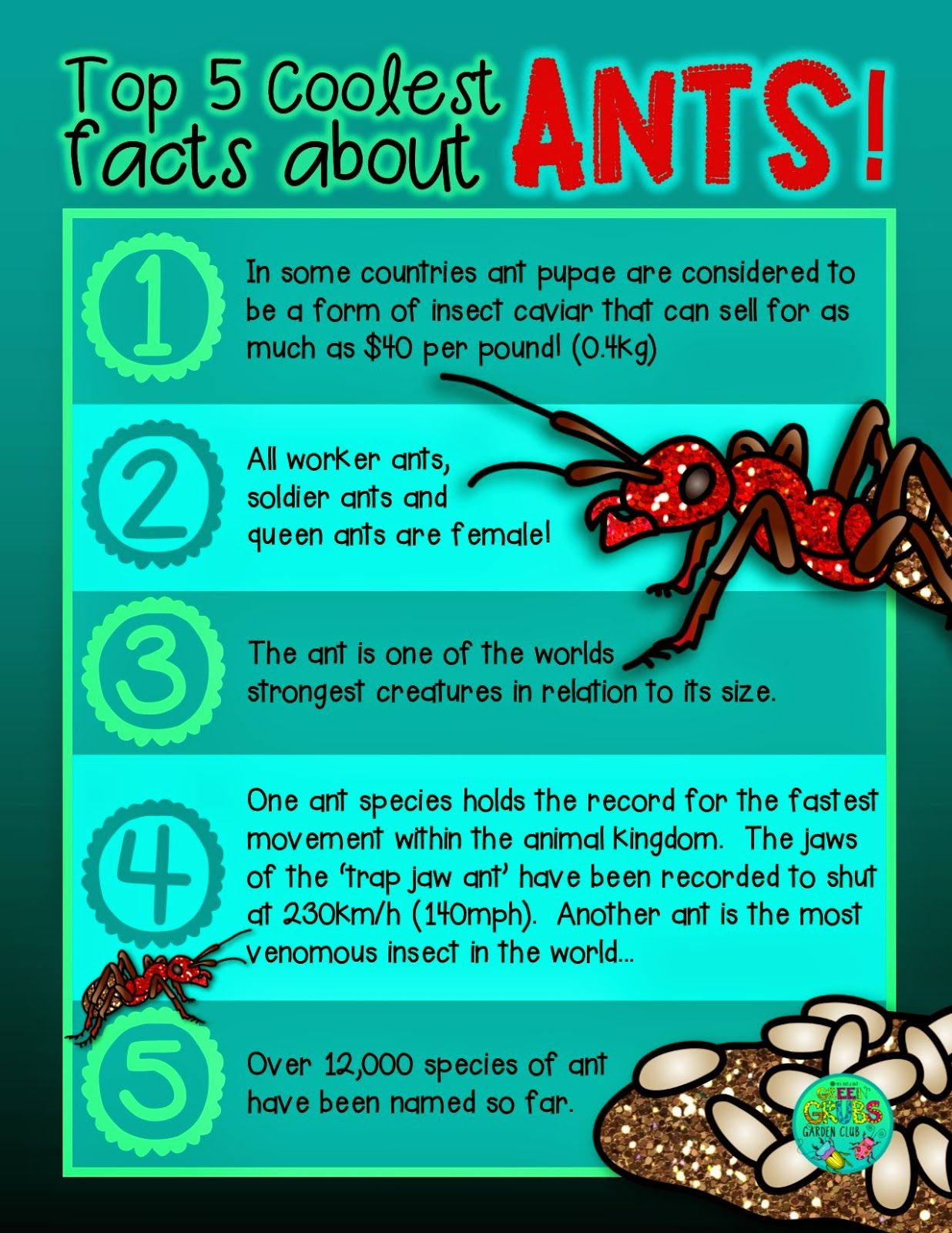 FREE PRINTABLE~ Top 5 coolest facts about... ANTS! {Green Grubs ...