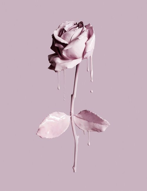Painted Rose Pink Aesthetic Iphone Background Iphone Wallpaper