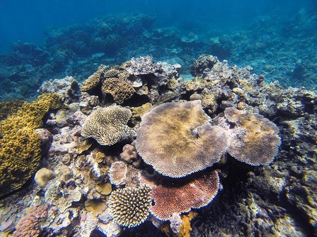 regram @peterstridh Dear Instagram! ...Still looking for Dory.  #sunscreenboys #3öborochenfotograf #latergram #snorkeling #greatbarrierreef #gopro #seeaustralia #beautiful #caption by conflans78 http://ift.tt/1UokkV2