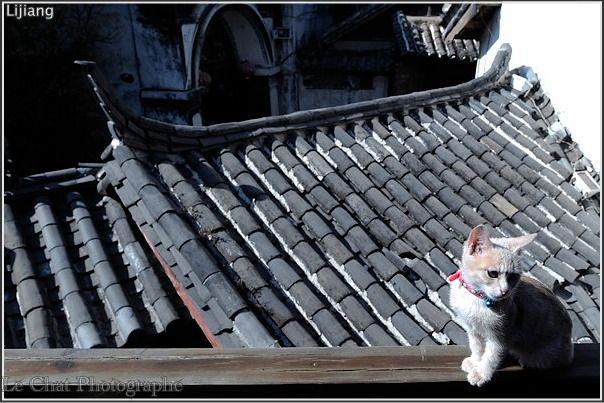 chaton sur un toit chinois