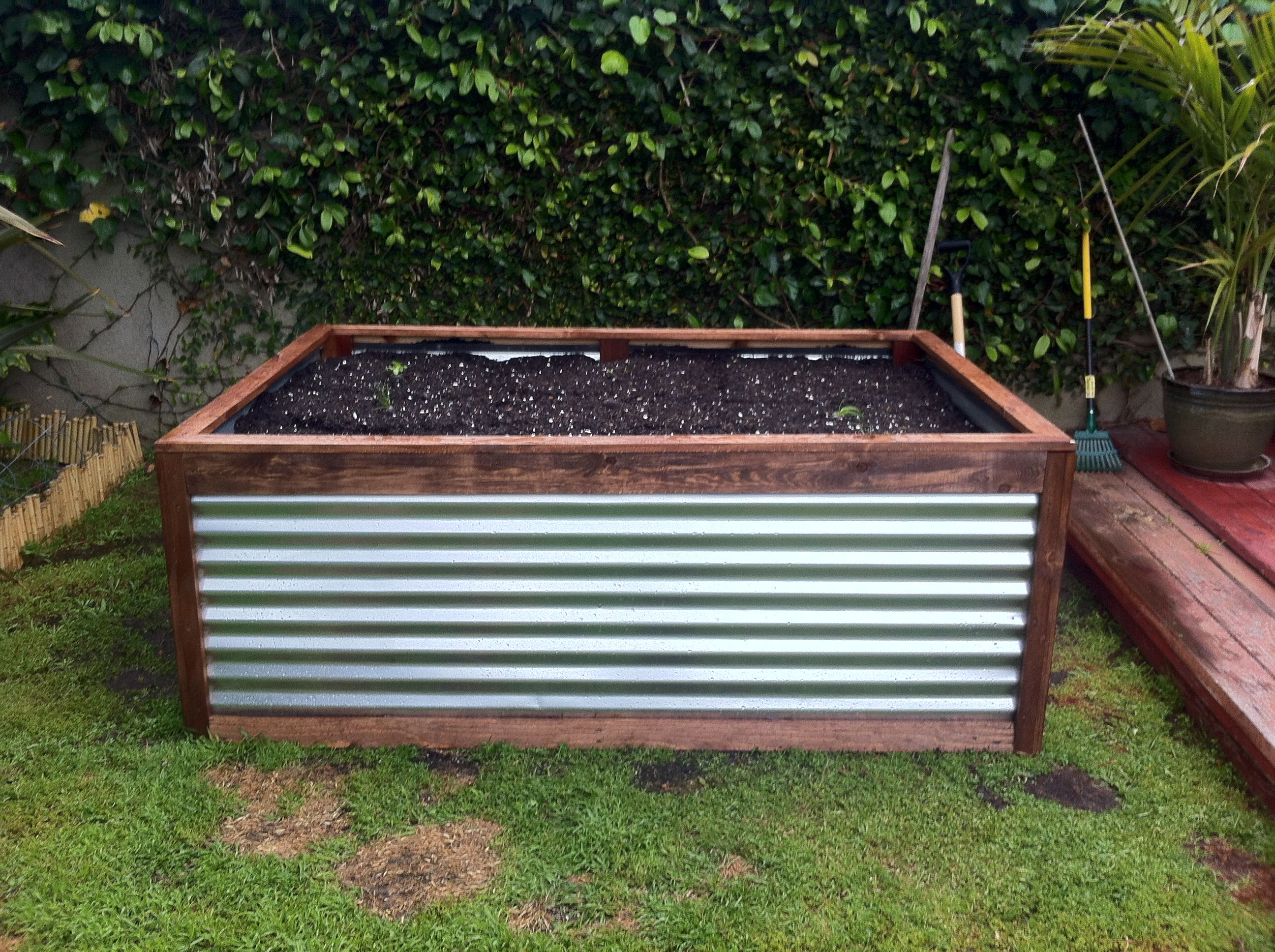 Raised Galvanized Steel Planter box that Peter built. Easy to build and  looks great!