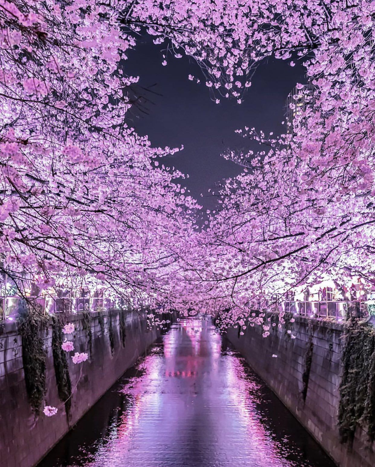 On Twitter Japan Photo Beautiful Nature Cherry Blossom