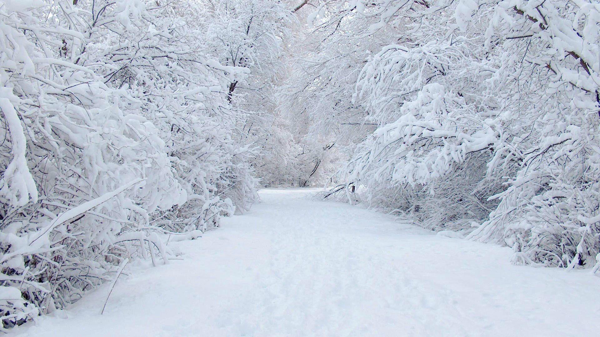 10 Latest Winter Wonderland Background Pictures Full Hd 1080p For Pc Background Winter Wonderland Background Snow Pictures Background Pictures