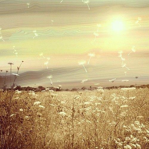 Imagen de amazing, flowers, and landscape