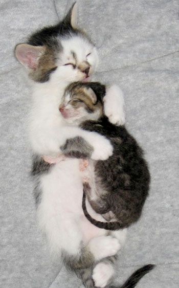 Kittens And Their Adopted Brother Love Meow Kitten Cuddle