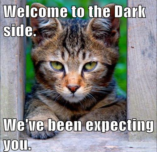 to the Dark side Bad cats, Funny cats, Crazy cats