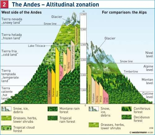 different flora up the side of a mountain diagram google search rh pinterest com