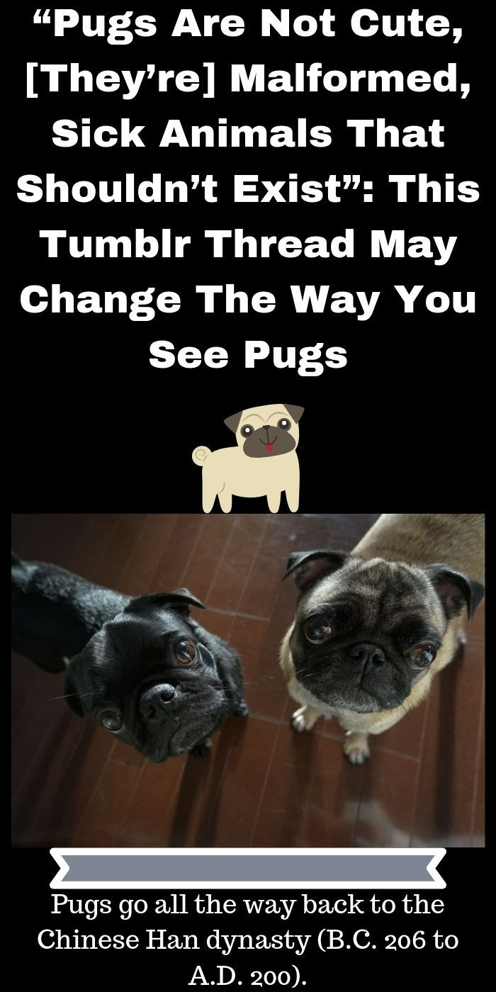 Pugs Are Not Cute They Re Malformed Sick Animals That Shouldn