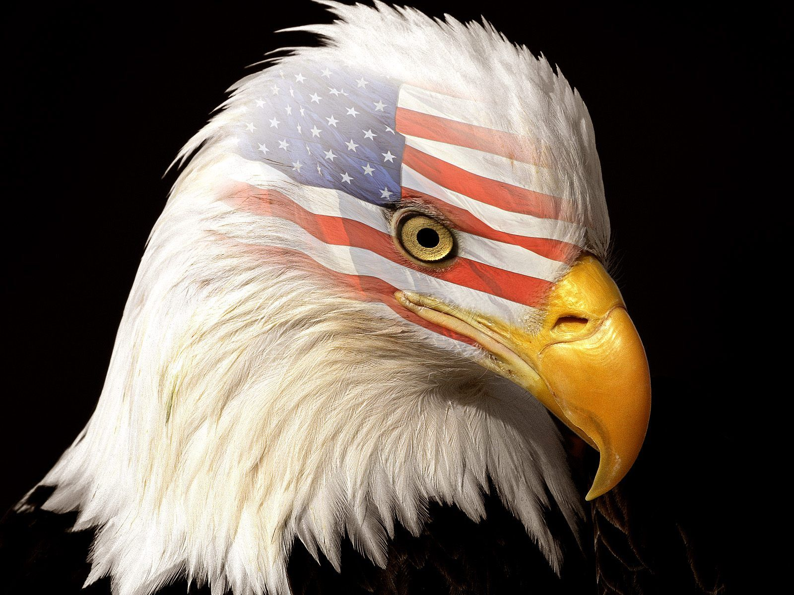 Fantastic Wallpaper Horse Eagle - 80df97b863cfda83177ef17674055dd4  You Should Have_312474.jpg