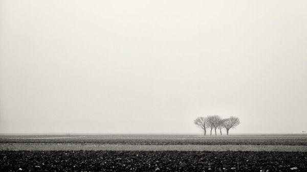 Dalla Nebbia #black&white