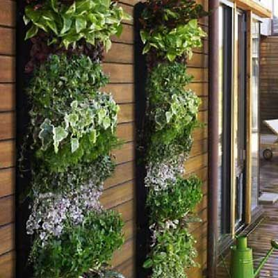 Beautiful - Living Walls are the perfect solution for gardeners that live in small spaces... or gardeners that live in large spaces... actually, living walls are awesome for everyone.