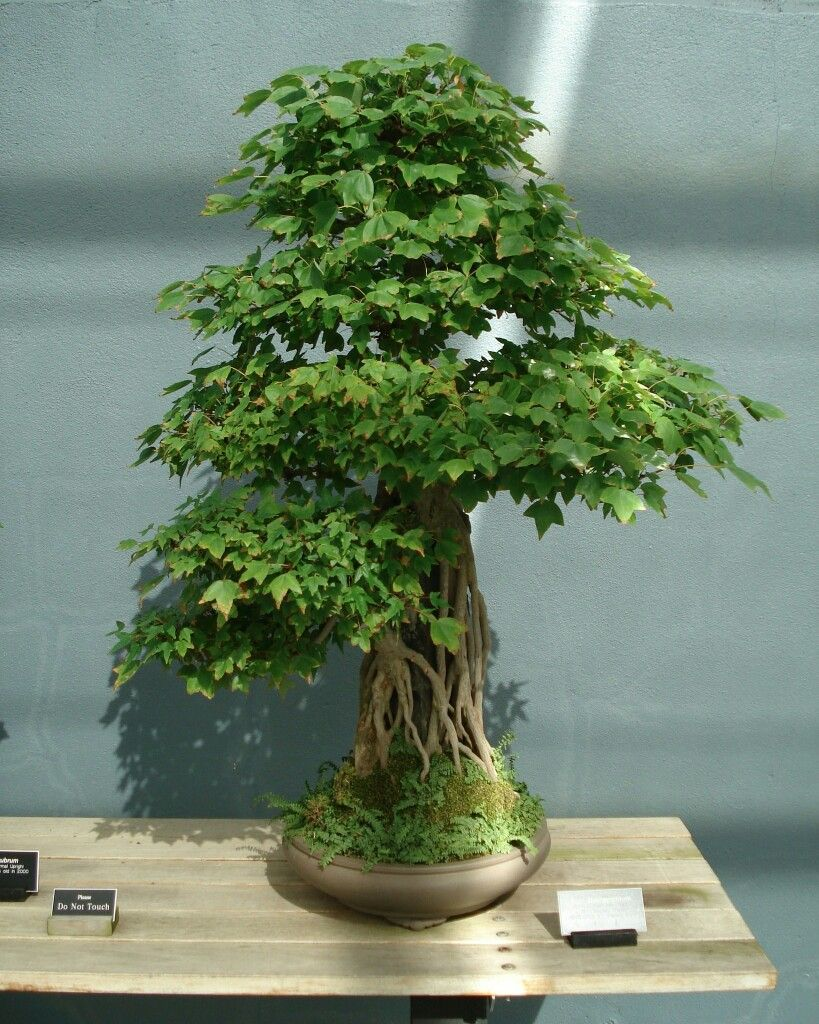Bonssi In 2020 Bonsai Bonsai Art Bonsai Plants