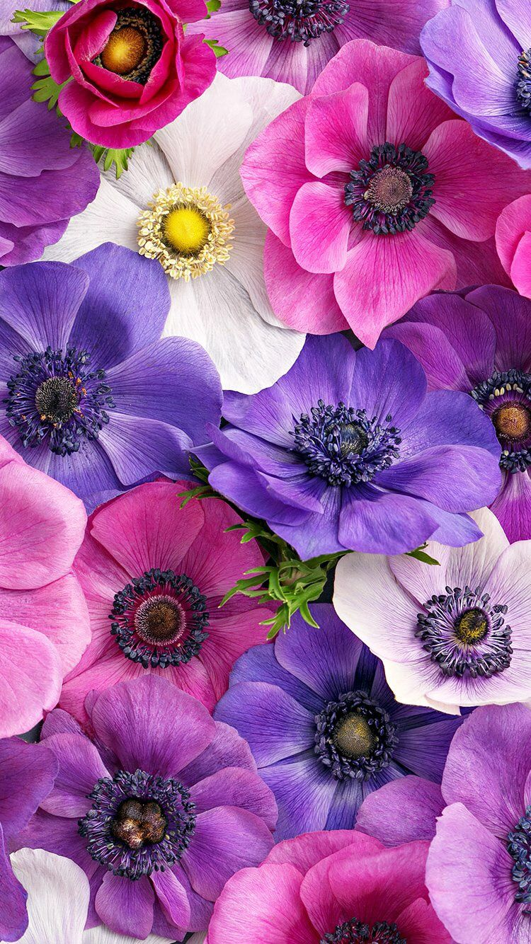 Wallpaper Iphone Flowers Flowers Floral Flower Pictures