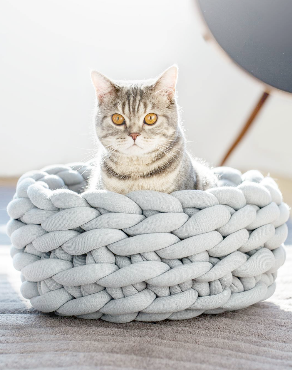 Cats And Kittens For Sale Mn Brindley Cat And Kittens Lane Diy Cat Bed Knitted Cat Puppy Pillows