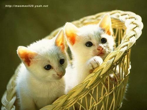 (2) Süße Katzenfotos