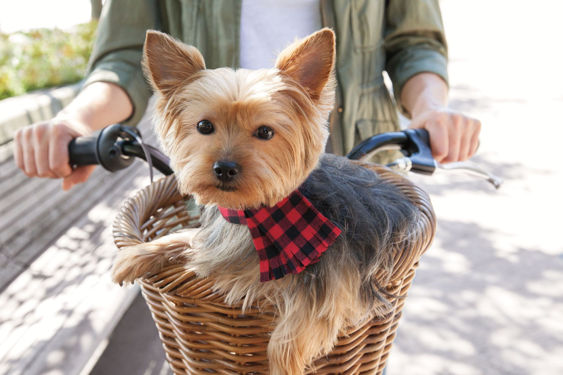 Usher in the fall weather in style with a checkered scarf dog collar
