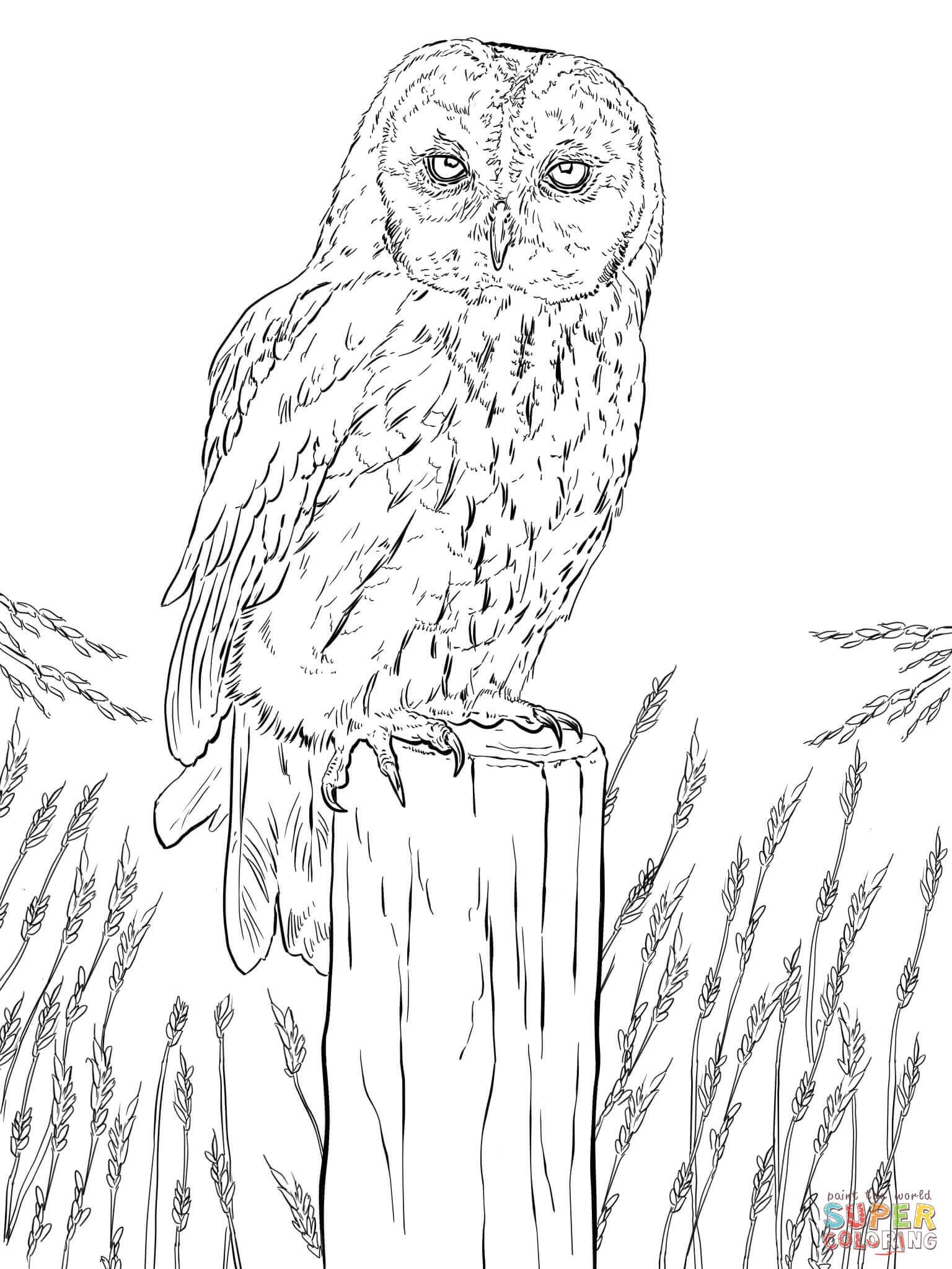 Printable Owl Coloring Pages Tawny Page Pagesree Dinosaur