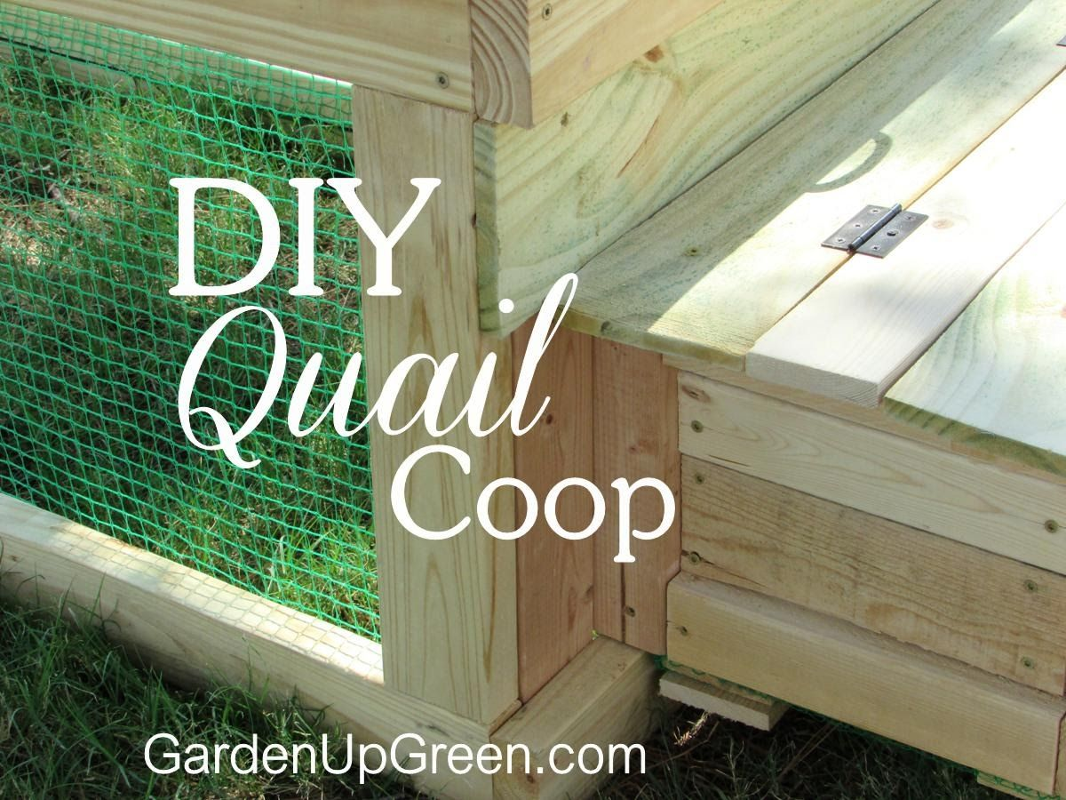 build your own backyard diy quail coop projects to try