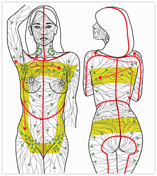 Lymph Drainage Map Manual Lymphatic Drainage Mld Video