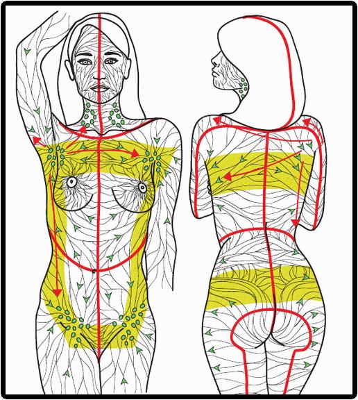 Lymph Drainage Map | Manual Lymphatic Drainage (MLD) video