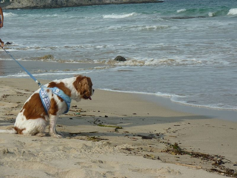 犬連れ旅行 おでかけ おすすめ 伊豆 下田 ドッグリゾート Frou Frou フルフル まちろブログ 犬 旅行 伊豆 犬