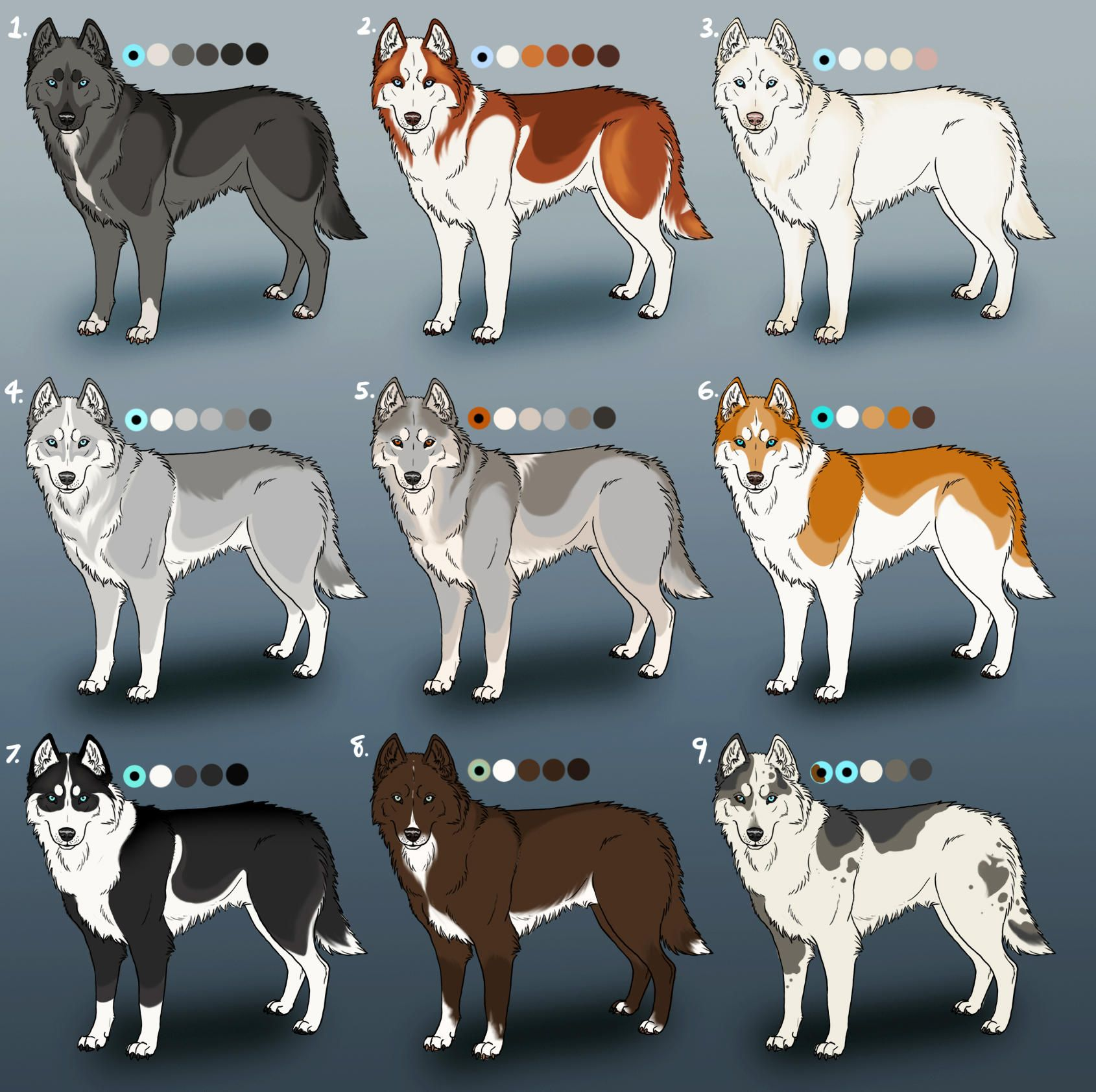 Pure Siberian Husky Adoptables 4 Closed By Sedillo Kennels