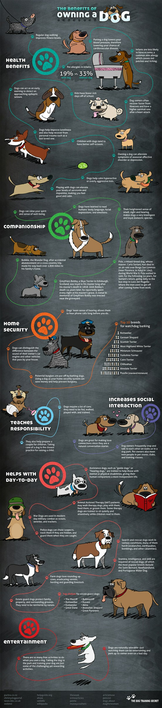 The Benefits Of Owning A Dog [Infographic]