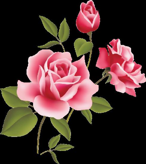 flores en png para artesana y diseos primavera