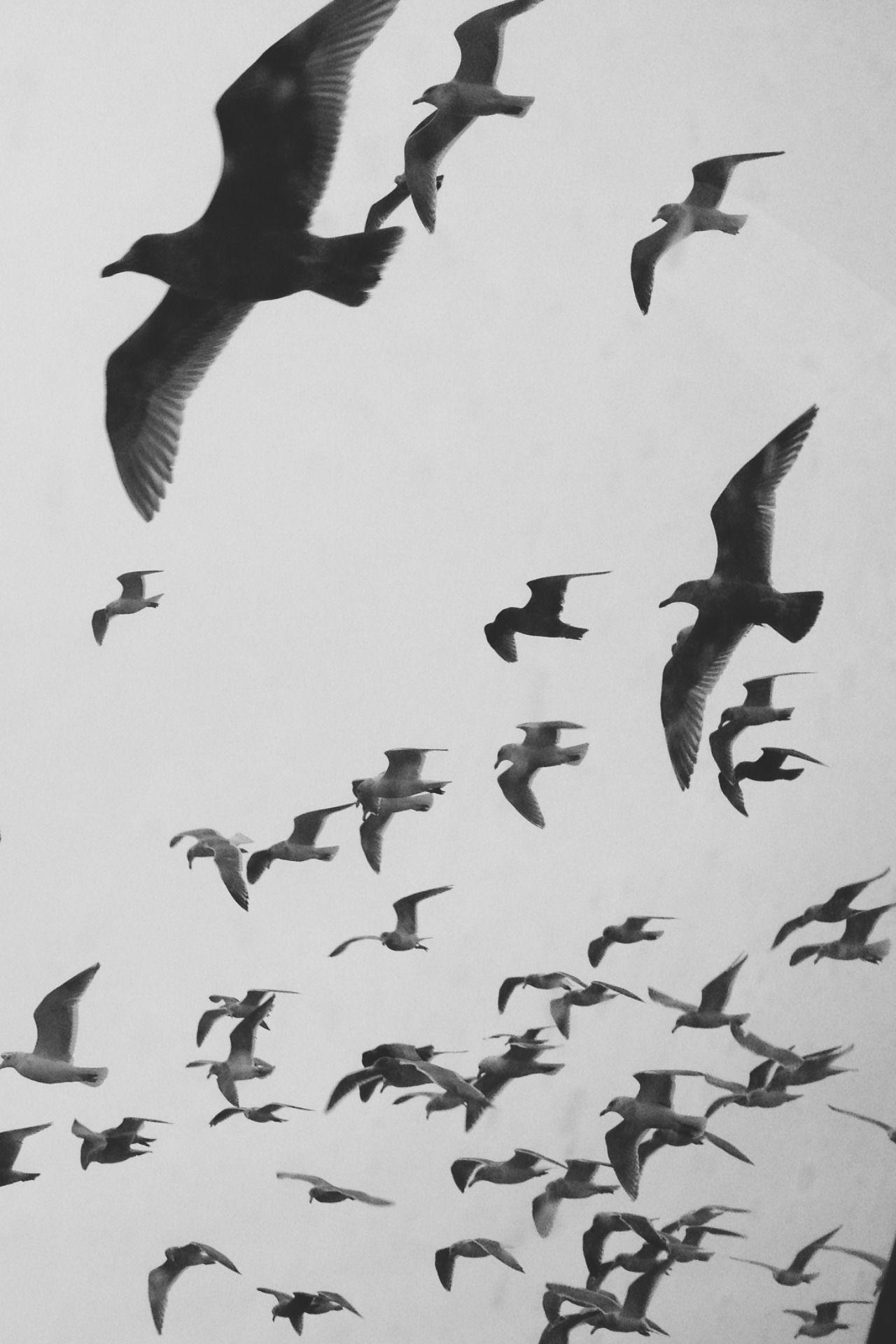 Frankly Esoteric Photo Birds Flying Bird Wallpaper Birds In The Sky